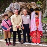 熊野 中辺路 『野中の秀衡(ひでひら)桜』 「近野 桜 夢物語/さくらのコンサート」。