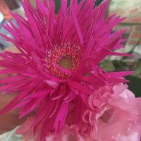 八重が大流行の花業界