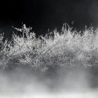 里山の白梅
