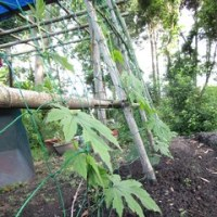 菜園の・・夏野菜・・