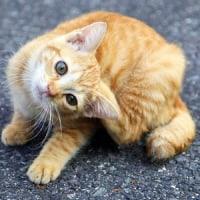 ニャンタのTiwtter用画像トレパン!!