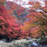 紅葉を見に行きました