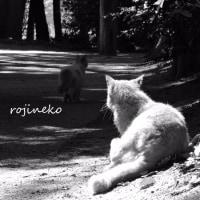 人を癒す猫の森