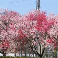 春はやっぱり!