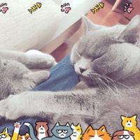 ブリとボブとお昼寝。