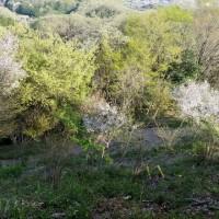 新緑と淡い桜色