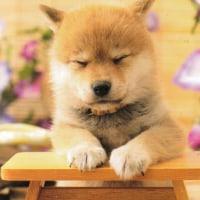新年は酉年・・・犬も猫も眠ってます!
