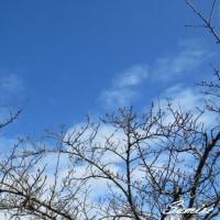 散歩、野鳥、椿