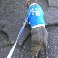 猫だってボルダリングをしてみたいにゃ!
