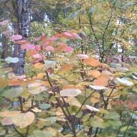 我が家の秋