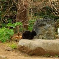 三渓園・猫
