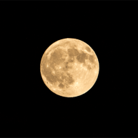 中秋の名月と彼岸花
