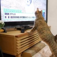 ミィもTV好き☆