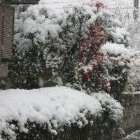 驚きの初雪