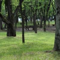 都会的な公園・・・☆