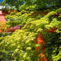 【Apr_24】下鴨神社西参道鳥居