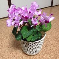 室内管理の鉢2