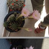 今年も咲いたゲゲゲ花