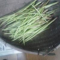 4月の収穫その3