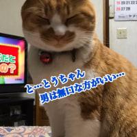 猫の日…⁇⁇