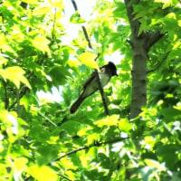 南港野鳥園  AM  5/27