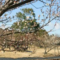 左近の桜・右近の橘