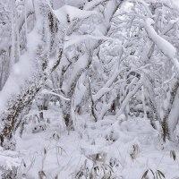牧ノ戸峠の冬模様5・・・【いな】