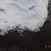 雪の下から