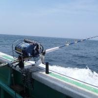 5月12日アブラボウズ調査、18キロ1匹、ビックサイズにハリス24号切られ、バラシ2回残念、餌サンマ、鉛350号。