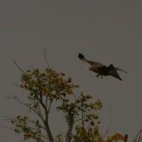 小学校でのスライドショー アフリカ・ボツワナ・南アフリカの鳥