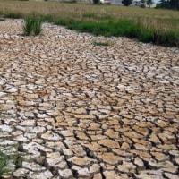 ベトナムが水不足に悩む