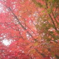 紅葉狩り 英彦山にて
