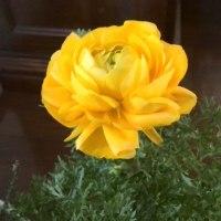 花盛り88