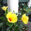 店先のお花