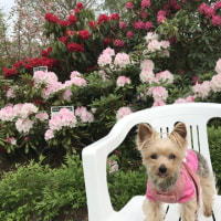 石楠花ガーデン