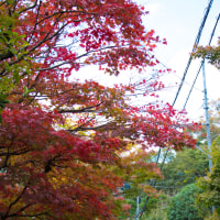 秋色鎌倉2016 寿福寺~海蔵寺紅葉ストリート