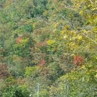 泉ヶ岳の紅葉