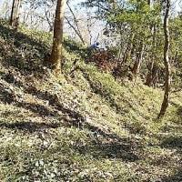 動画 2017年2月19日 滝山城跡下草刈り 「出丸」三段目の曲輪「ここは滝山公園」