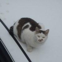 車上の野良ネコ