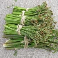 「沖縄願寿ゴーヤー」を蒔種、「四葉」苗・「ひとくちメロン」苗の移植