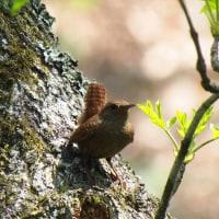 八ヶ岳自然文化園周辺 5月22日
