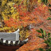醍醐寺 伽藍エリア の紅葉