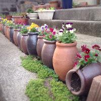 海辺の家のタコ壺の花