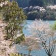 桜~2014~⑧