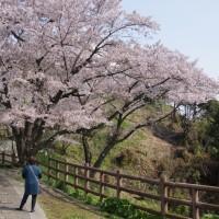 花の山・黄金山 170412