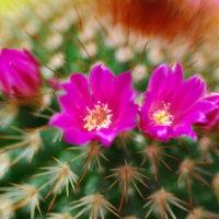 [#3521] 2月,3月に撮った花の写真(4)サボテン