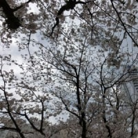 堀川、花見会決行!