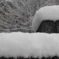 初雪です~