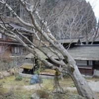 今年も4月上旬に温泉を巡って軽井沢の山荘のチェックを 2017.4.6(木)~8(土) 2/5