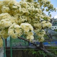 さいたま市花めぐり(初夏)